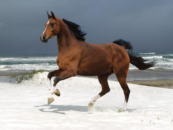 лошадка и море (700x525, 248Kb)