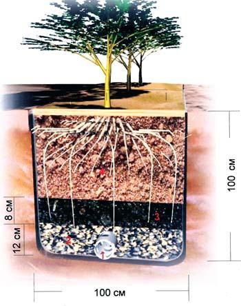 Дренирование почвы по растениям картинки