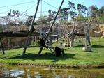 Превью обезьяны в лиссабонском зоопарке (4) (700x525, 378Kb)