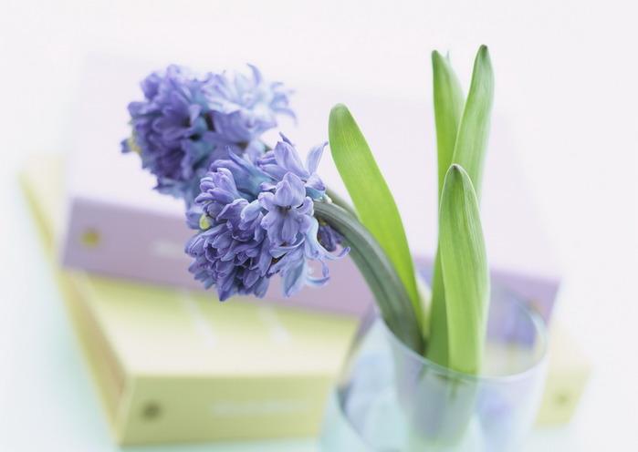 цветы6 (700x496, 48Kb)