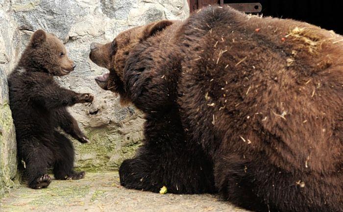 bear_01 (700x433, 72Kb)