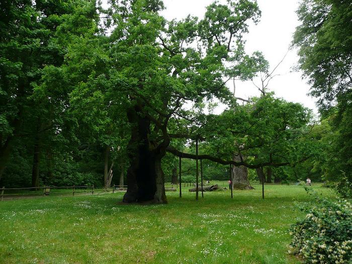 Дворец Рачиньских в селении Рогалин 51138