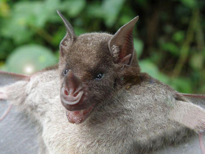 bat_1000 (700x525, 73Kb)