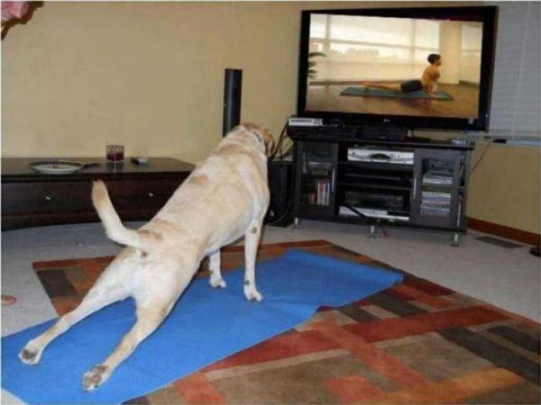 yoga9 (600x450, 35Kb)