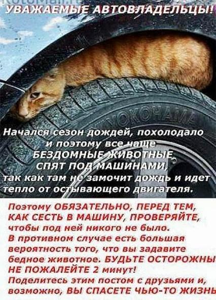 кошки под автомобилем autumn_cat (426x591, 130Kb)