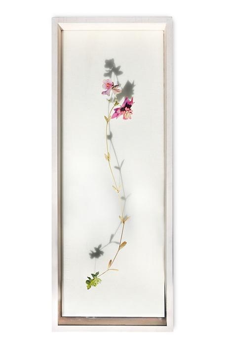 bloem-005-a (466x700, 129Kb)