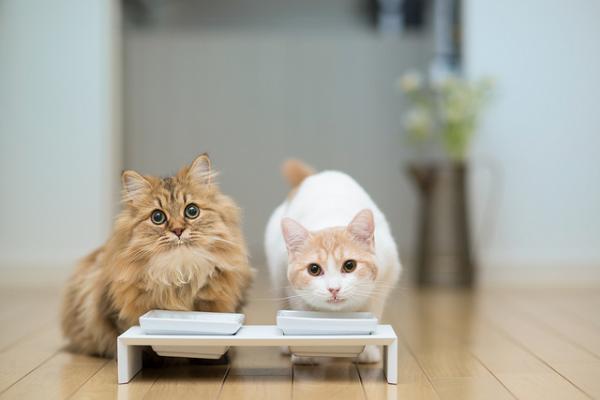кошка ест (600x400, 18Kb)