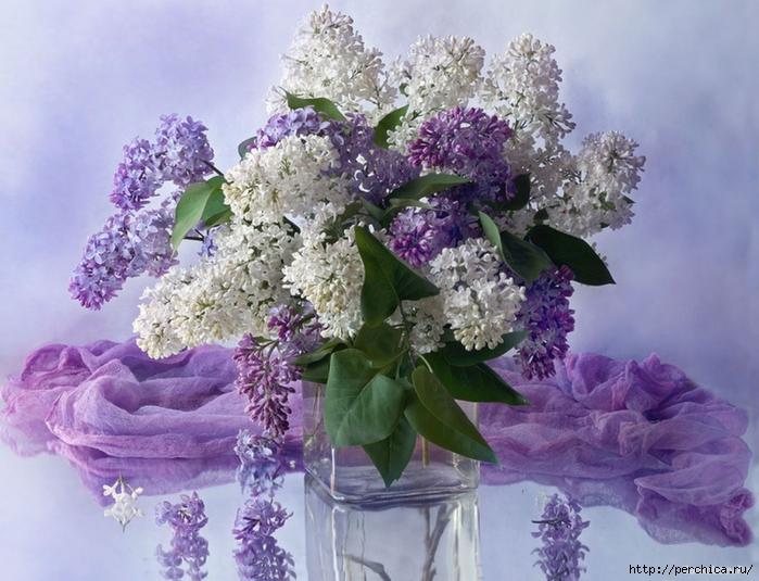 4979645_Bankoboev_Ru_buket_sireni_na_stole (700x535, 290Kb)