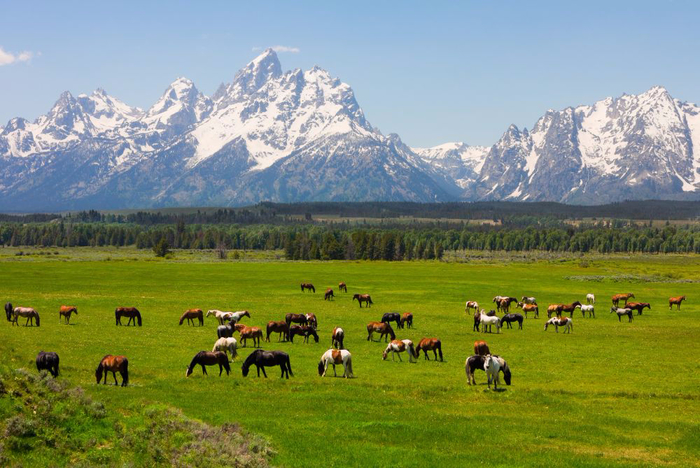 grand-teton-national-park (700x468, 403Kb)