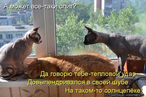 1431184006_kotomatrica-31 (500x333, 190Kb)