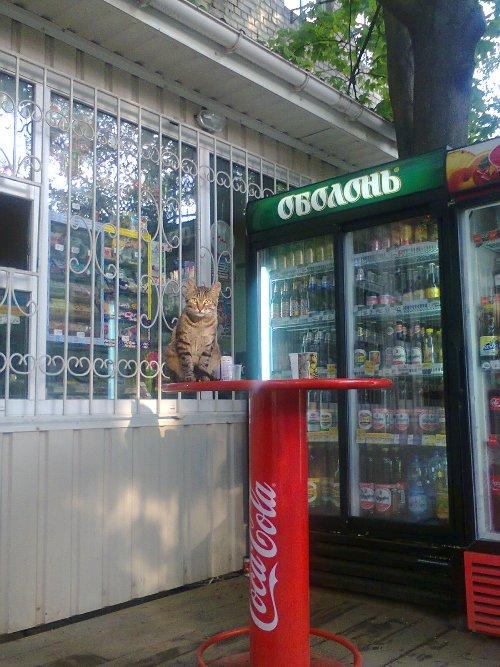 кот-выпивоха