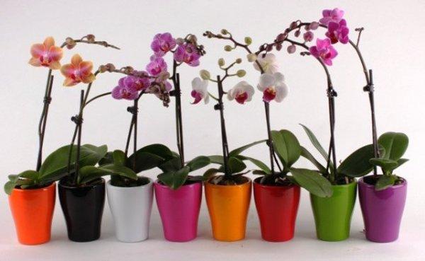 Эти прекрасные цветы орхидеи!!!