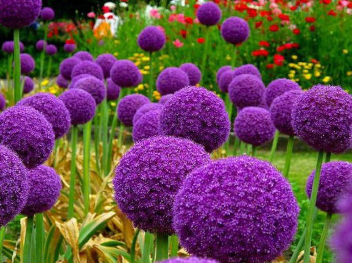 Flower 22 (690x517, 101Kb)