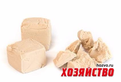 drozhzhi (424x289, 79Kb)