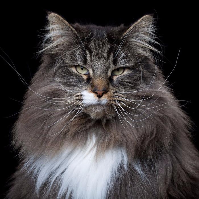 Портреты кошек и собак от фотографа Роба Баху9 (700x699, 390Kb)