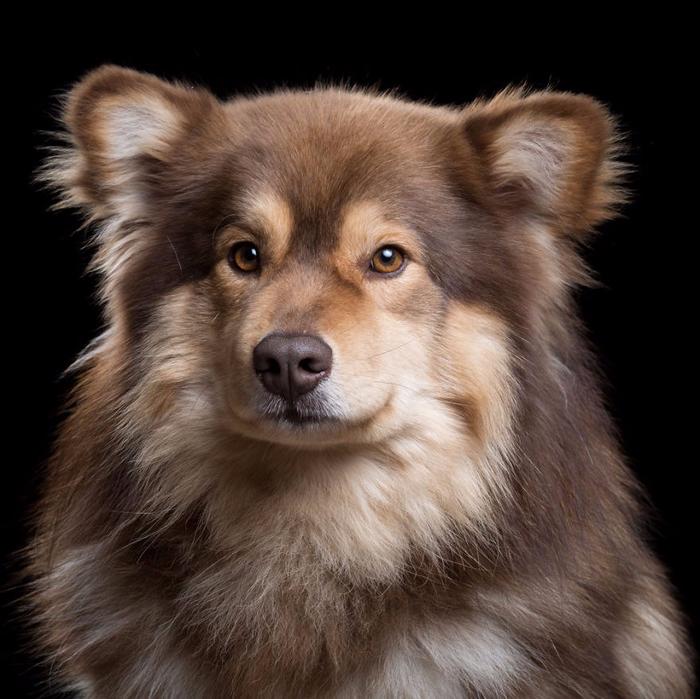 Портреты кошек и собак от фотографа Роба Баху6 (700x699, 394Kb)