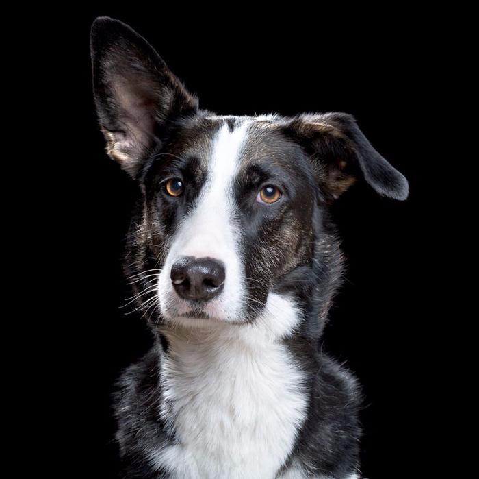 Портреты кошек и собак от фотографа Роба Баху8 (700x699, 231Kb)