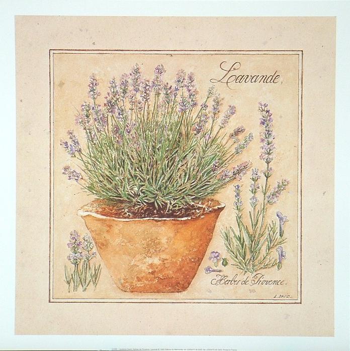 Herbes Lavande (696x700, 547Kb)