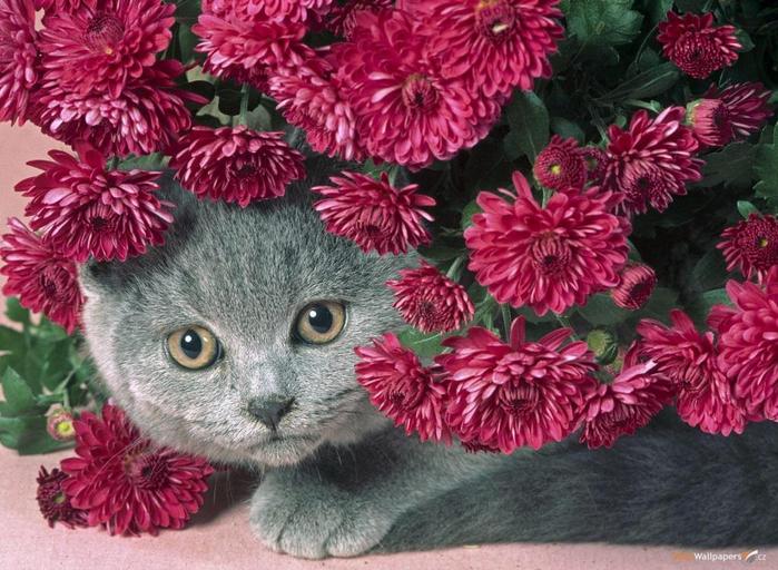 Springtime-Kitties-20 (700x512, 431Kb)