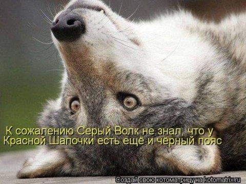 1337589566_samie_smechnie_kotomatrici_936_92537-73 (480x360, 118Kb)