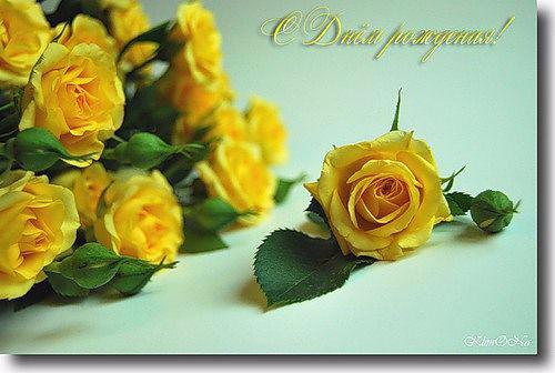 Желтые розы поздравления с днем рождения