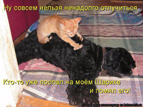 1431703193_kotomatrica-18 (500x374, 216Kb)