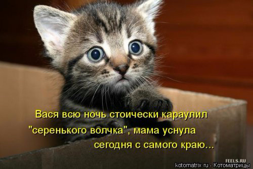 1431703203_kotomatrica-10 (500x333, 150Kb)