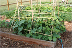 Превью cucumber-trellis-raised-bed (602x401, 223Kb)
