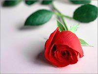 роза. iO5BQ0V7K (200x150, 5Kb)