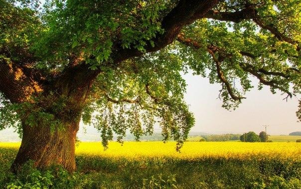 Сила деревьев (604x379, 104Kb)