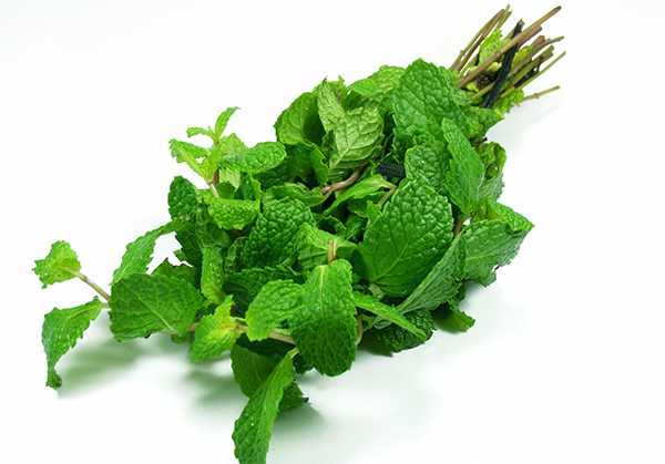 The-essential-oil-of-peppermint (600x419, 349Kb)