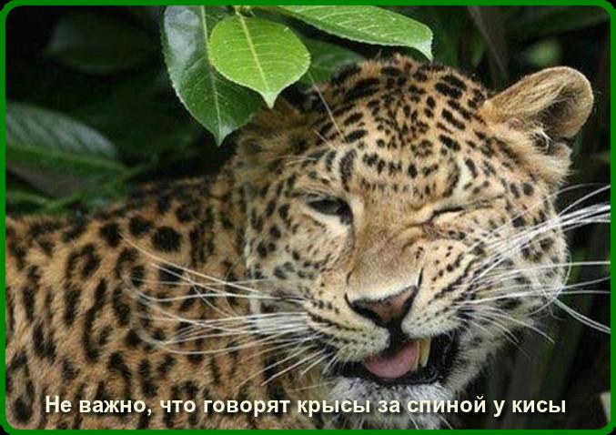 oie_qTDPTt2xIaiM (677x478, 1802Kb)