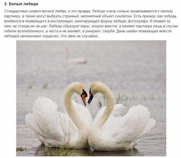 7 животных, преданности которых можно позавидовать2 (604x529, 224Kb)