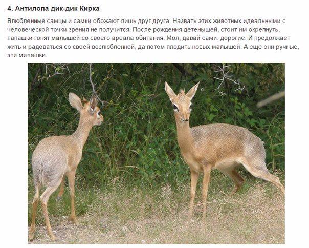 7 животных, преданности которых можно позавидовать4 (604x484, 274Kb)