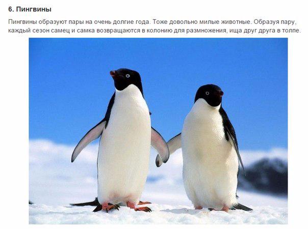 7 животных, преданности которых можно позавидовать6 (604x450, 157Kb)