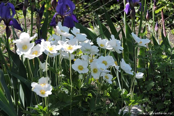 цветы (1) (700x466, 360Kb)
