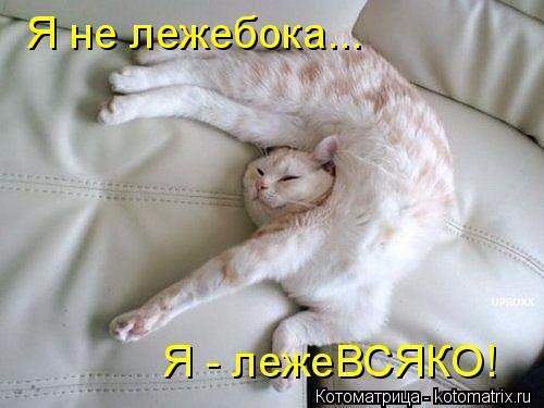 1432373956_kotomatrica-5 (500x375, 163Kb)