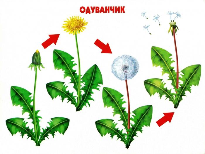 Тематические недели с детьми до 2 лет/5672262_odyvanchik_111 (700x525, 231Kb)