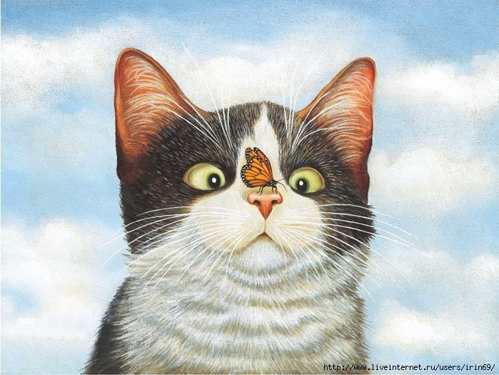 deluxe-note-cards-american-cat-2080505-2 (700x525, 349Kb)