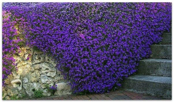 Когда сажать цветы что все лето цветут 76