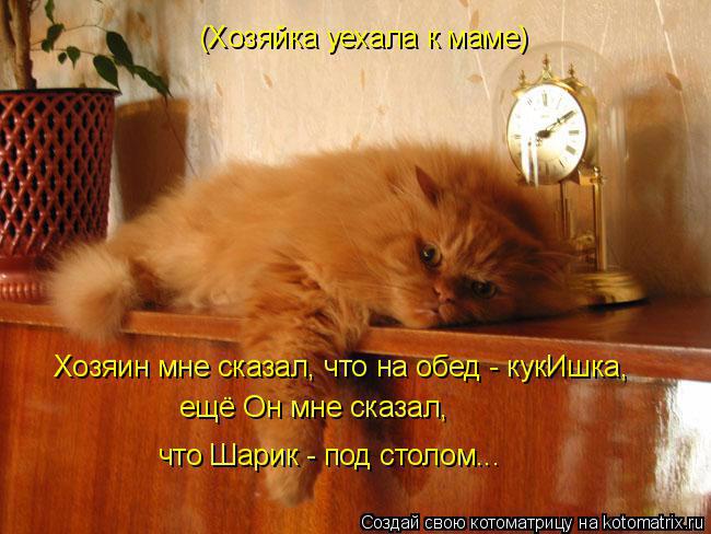 kotomatritsa_- (650x488, 314Kb)