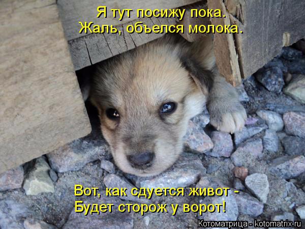kotomatritsa_2 (600x450, 257Kb)