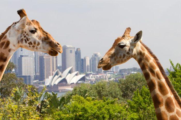 Австралийский зоопарк (700x466, 60Kb)