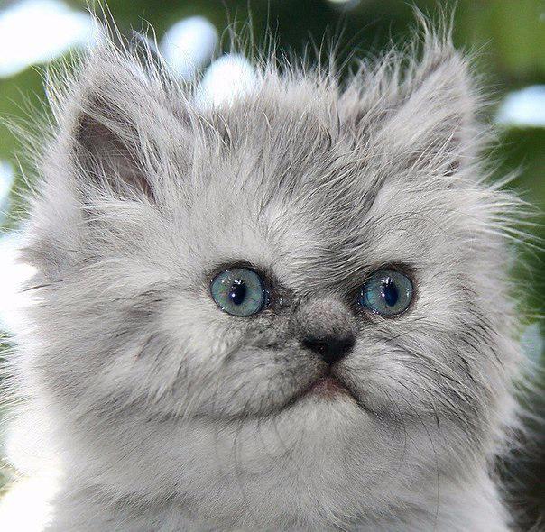 Котенок с арбузом5 (604x590, 316Kb)