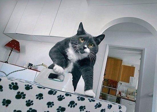 Мне срочно нужен этот кот (550x393, 169Kb)