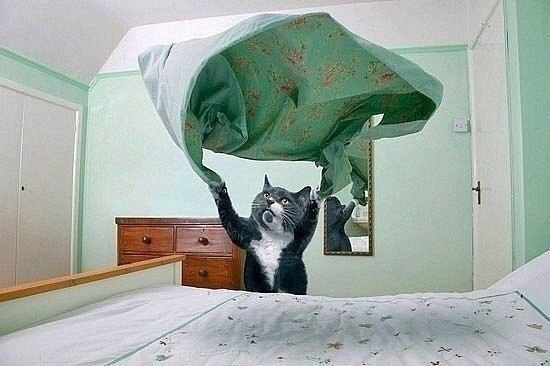 Мне срочно нужен этот кот2 (550x366, 141Kb)