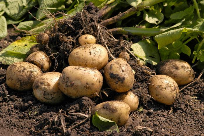 К чему снится собирать овощи с огорода