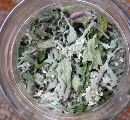 Ферментация листьев малины в домашних условиях 578