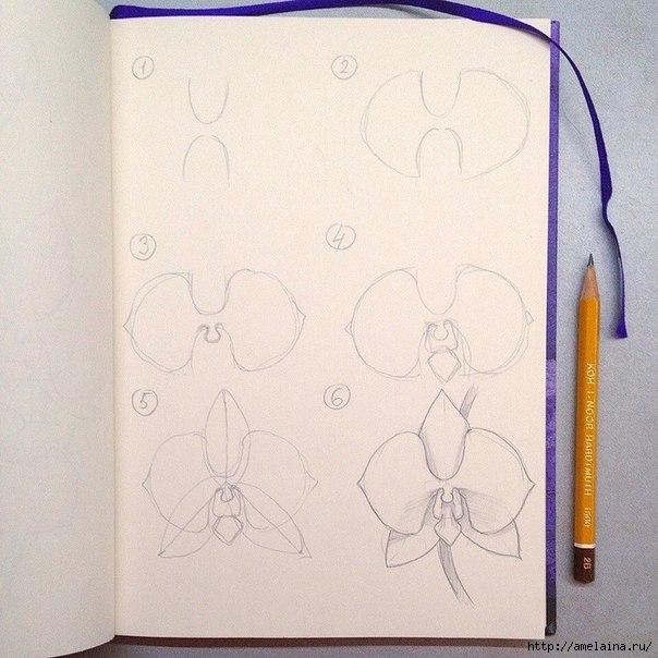 Как нарисовать орхидею1 (604x604, 179Kb)