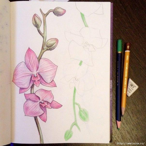 Как нарисовать орхидею3 (604x604, 185Kb)